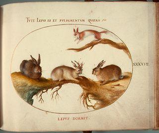 Animalia_Qvadrvpedia_et_Reptilia_(Terra)_Plate_XLVII-1