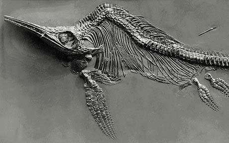 Ichthyosaur_1500509c