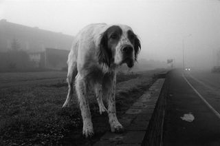 06DOGS-articleLarge-1
