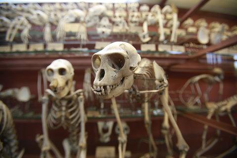 14menagerie-primates-blog480