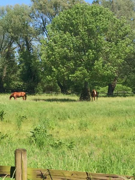 Horses-wolfenbuettel